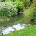 En trana i Hyde Park