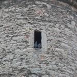 208 Tallin två duvor har hittat en privat plats